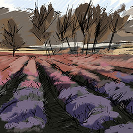 Outdoor, Painterly Illustration of Lavender Fields